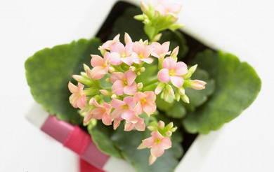 小型盆栽植物走俏