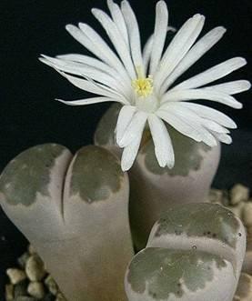 世界上最另类最有趣的植物(附图)