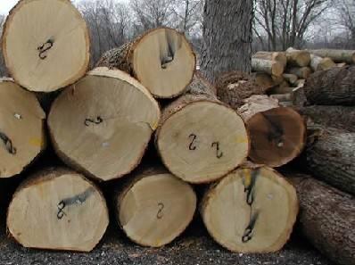 国内木材市场原木及锯材一周行情分析