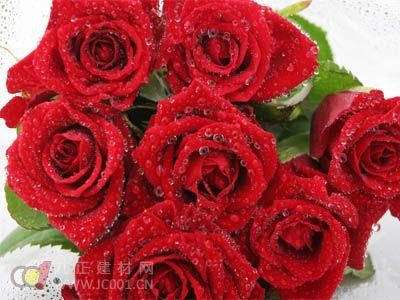 玫瑰的介绍     花单生于叶腋或数朵聚生