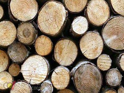 全球木材资源紧缺 进口木材涨价