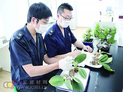 南京截获境外175种仙人掌种子 涉案金额大