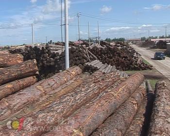 木材价格日益升高 木门企业应做好调整准备