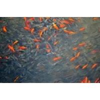 养鱼池防水漆鱼池漆环氧树脂防水漆防腐漆