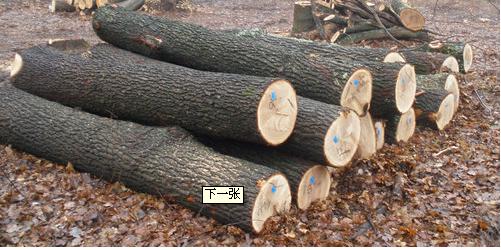泡桐原木及板材供应商