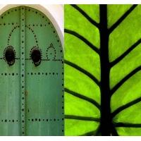 本杰明·摩尔涂料-绿色