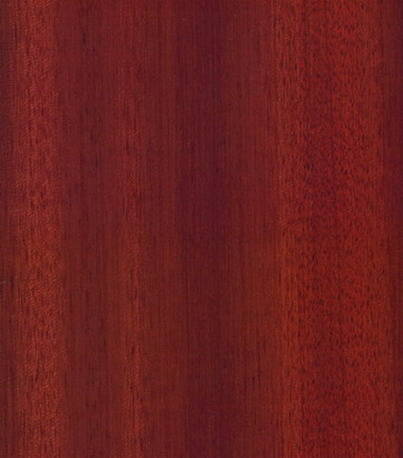 泉榴豆-中红色