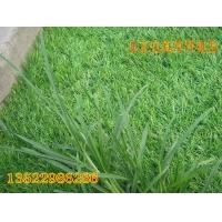 屋顶草坪仿真草坪 装饰草皮 人工草皮 人工草平