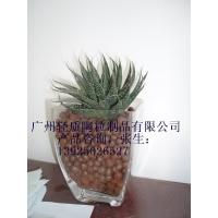 广州花卉陶粒8-12mm 规格齐全