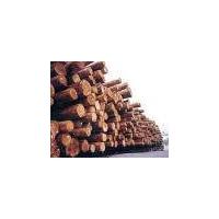 各种规格国产、进口原木