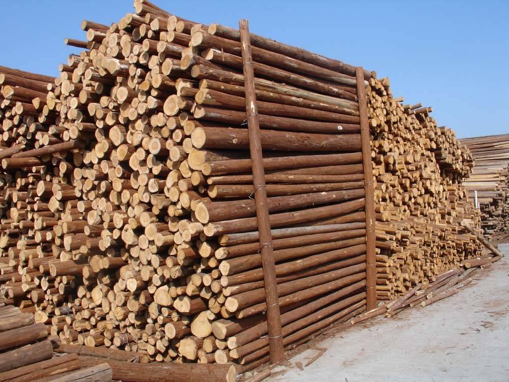 天津 详细链接       本公司经营各种原木,加松,花旗松,俄罗斯落叶松