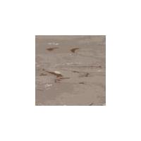 先威龙陶瓷-时尚地材(时尚登陆普ct411)
