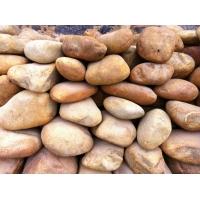 精选鹅卵石 广东鹅卵石 优质景观石 园林石