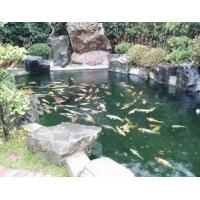 常州、锦鲤鱼池过滤净化水处理系统设备及服务工程